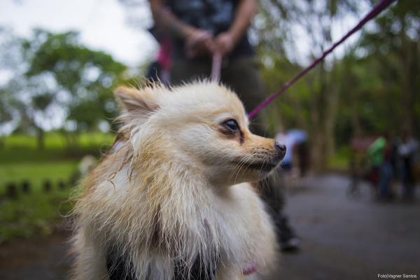 Campanha de Castração de Cães e Gatos é retomada pela Prefeitura de Cotia